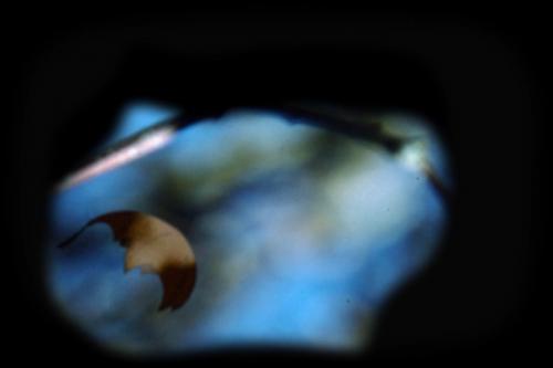 Leaf, 2005, 2 mins., 3 channel digital video projection, color, silent